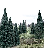 WS1588 - 4-6IN. BLUE SPRUCE (13)